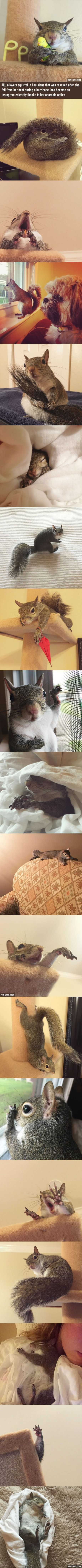 Jill The Squirrel rescued after hurricane becomes family's cutest member