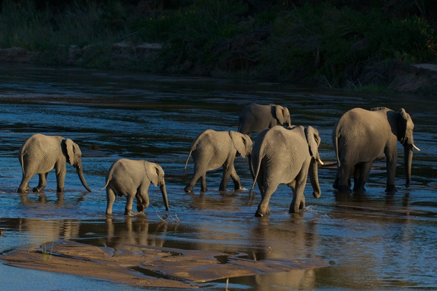 """NUMBER 9: """"Elephant Crossing"""" by Doug Croft, captured in July 2012 with Gary Hill as ranger."""
