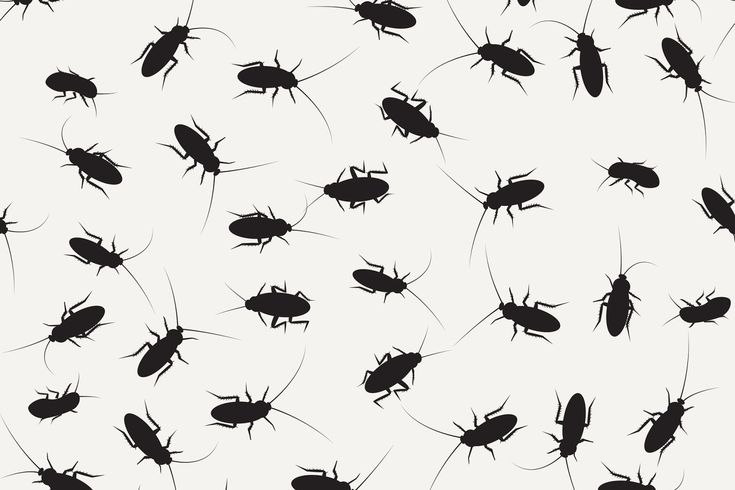 how to get rid of palmetto bugs and roaches