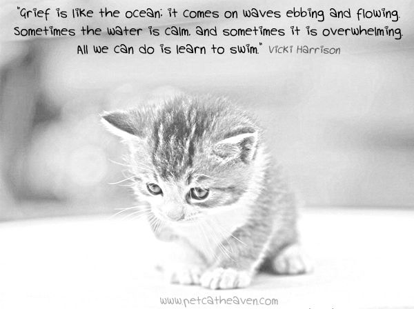 Grieving Cat Pictures Google Search A Heart Forever Broken Cats Pet Loss Animals