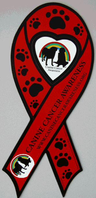 Heather C. chronicles her experience with dog cancer: if your dog has cancer, start here to learn what to do now that your dog has cancer.