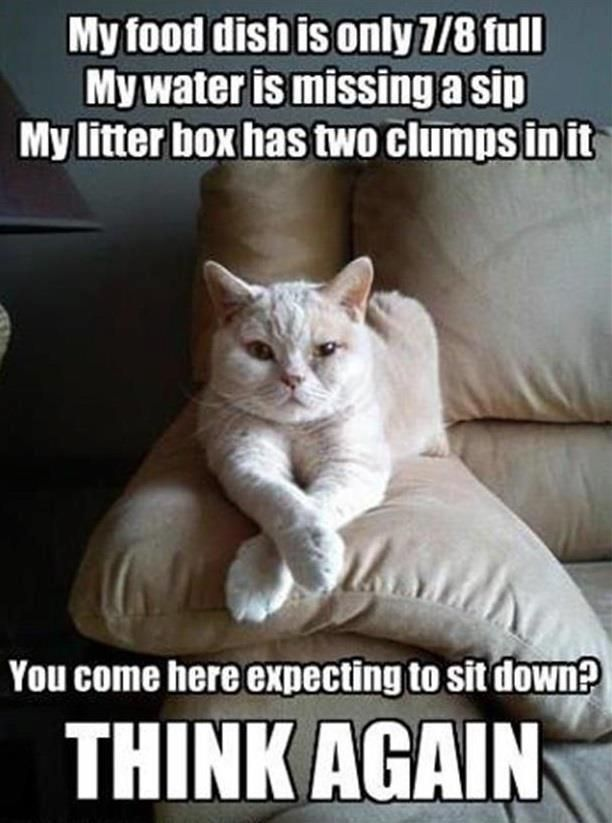 For the all the Cat owners...I mean servants out there.....and yes I have a few...  :)