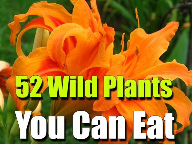 52 Wild Plants You Can Eat - SHTF, Emergency Preparedness, Survival Prepping, Homesteading