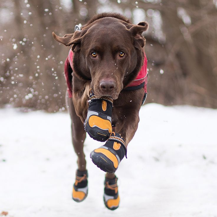 Dog booties protect paws in winter | Kurgo Step-n-Strobe Dog Shoes