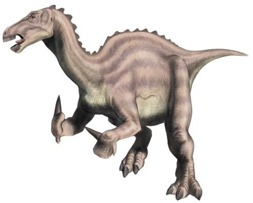 The Iguanodon was one of the first dinosaurs to be discovered and also the first named dinosaur creatures ever. Description from dinosaursfriend.blogspot.com. I searched for this on bing.com/images