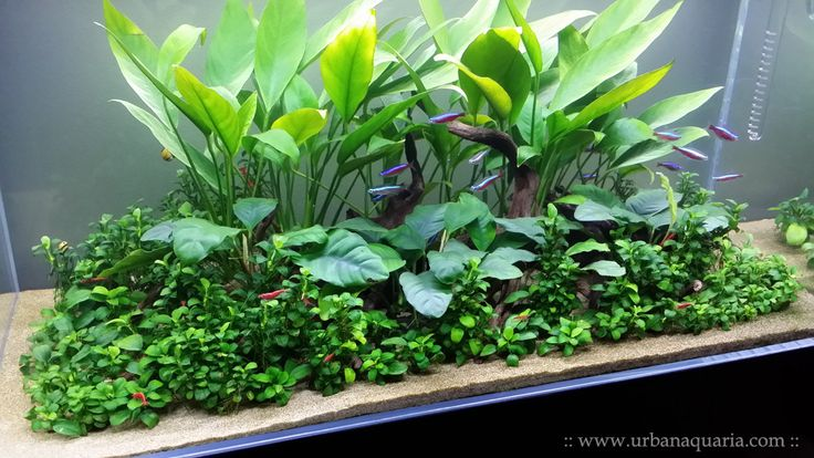 Natural Planted Aquariums For The Urban Dweller