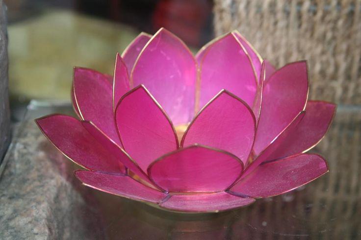 Lotus blomster pink - se flere Lotus blomster her