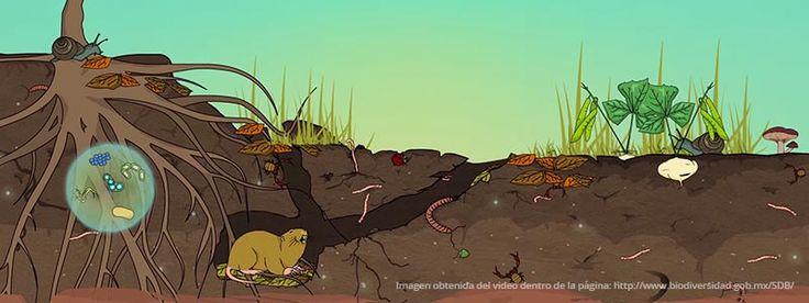 Día Mundial del Medio Ambiente: acciones para concienciar sobre la biodiversidad