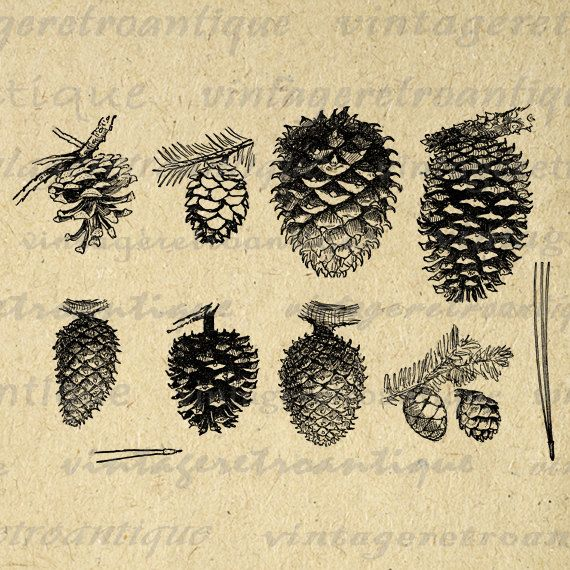 Pinecone Collection Printable Digital Image Pine Cone Graphic Collage Sheet Download Artwork Antique Clip Art. Printable high quality digital graphic clip art for fabric transfers, printing, pillows, t-shirts, and more. For personal or commercial use. This image is high quality, high resolution at 8½ x 11 inches. Transparent background PNG version included.