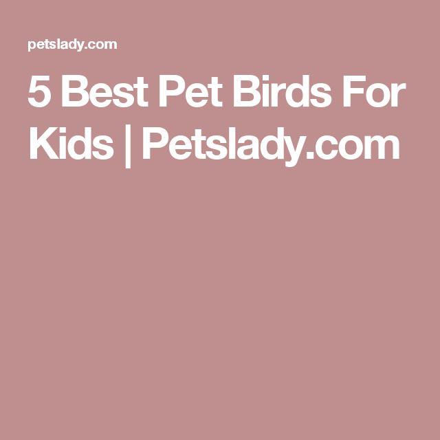 5 Best Pet Birds For Kids   Petslady.com