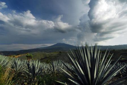 Del Tequila y sus historias #Tequila #Jalisco