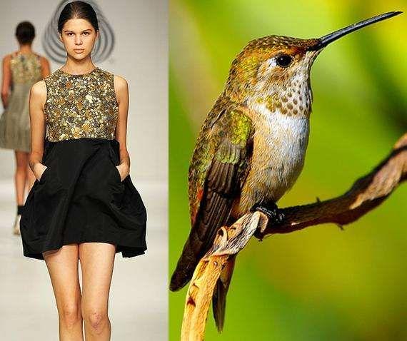 Avian Fashion  5bf580bde