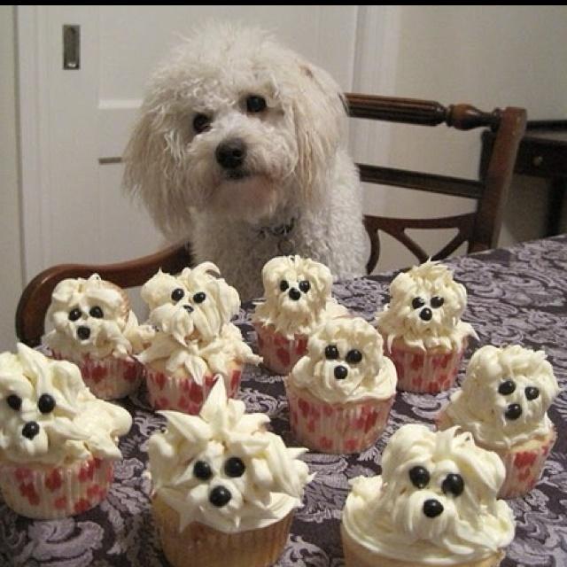 : Happy Birthday, Cupcake Rosa-Choqu, Birthday Parties, So Cute, Puppys Cupcake, Dogs Birthday, Dogs Cakes, Cups Cakes, Dogs Cupcake