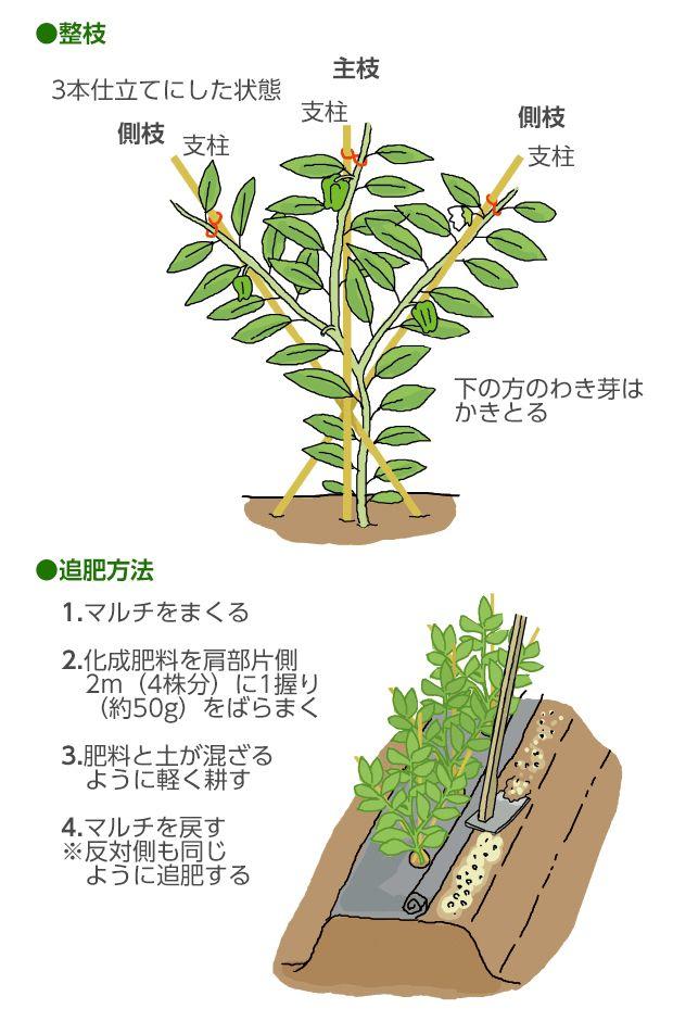 ボード 野菜栽培 のピン