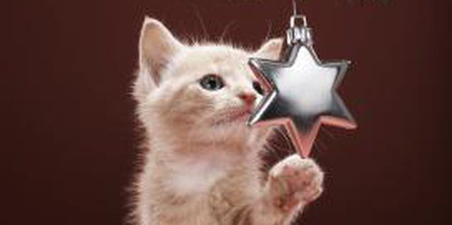 How to Make Cat Repellent to Put on a Christmas Tree | Cat ...