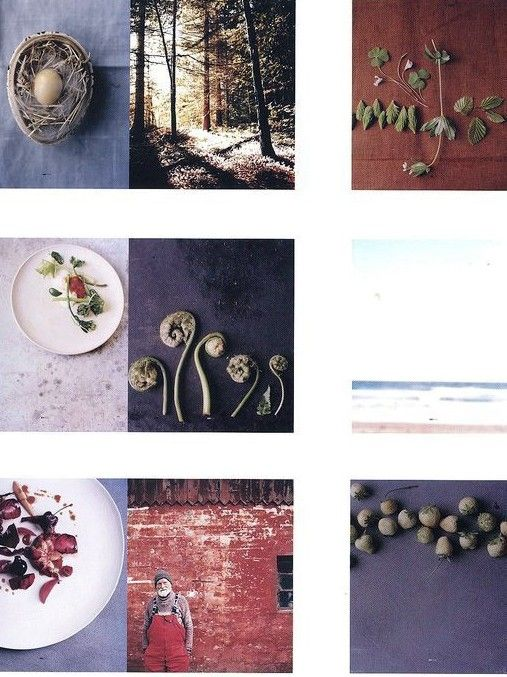 Noma, Time and Place in Nordic Cuisine, a great and really beautiful book about the Noma restaurant in Copenhagen