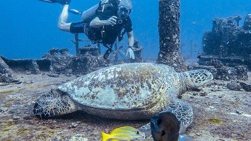 Wreck diving in Hawaii - Scuba diving in Hawaii #diving #seaturtle #kilroy #USA #Hawaii