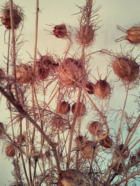 flores secas | Flickr