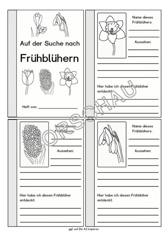 Frühblüher-Werkstatt für die Grundschule