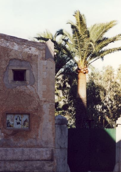 Palme, Mallorca - Foto: S. Hopp