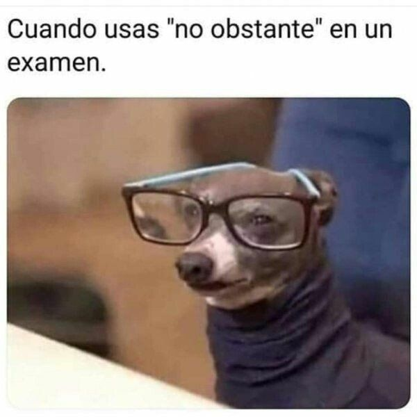 El Mas Listo Funny Animal Memes New Memes Super Funny