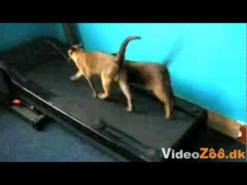 Roliga katter på video - alla de roligaste - YouTube