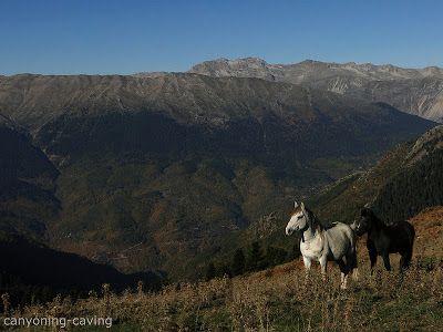 Wild horses at Pindus, Greece