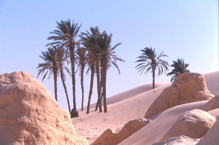 Last Minutes Thomas Cook - Vacances en Tunisie apd 380 euros!