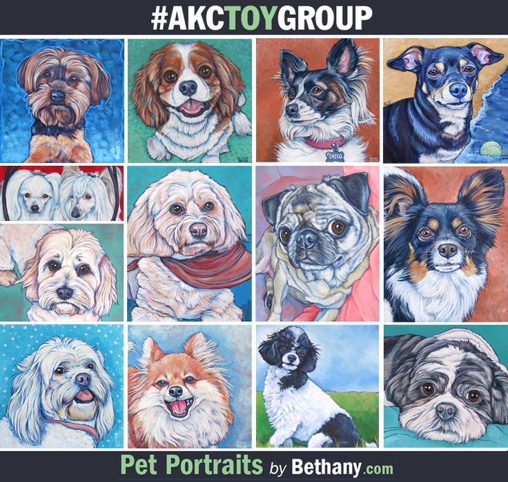 Group Toy Dogs : Some samples of custom pet portraits for dogs from the