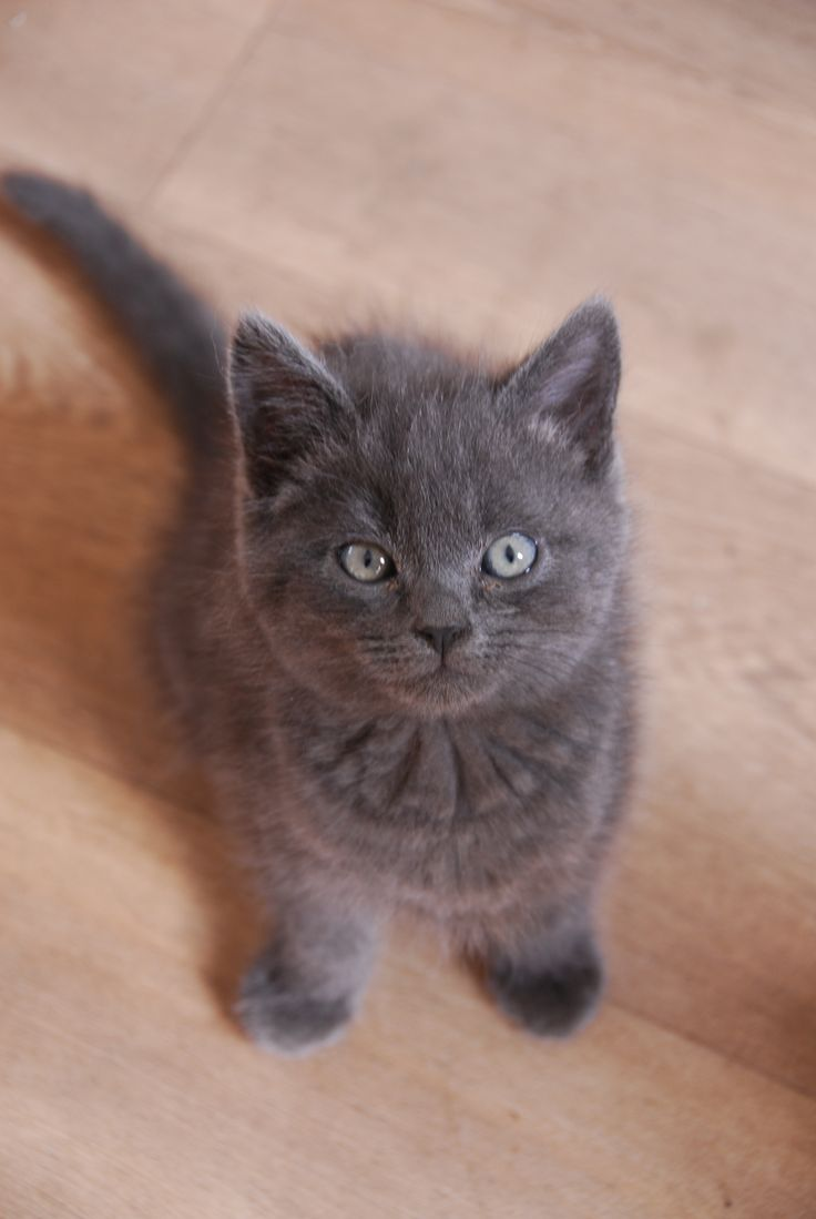 My kitten called Pip