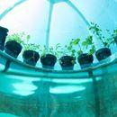 Ahora que muchos cultivos están devastando los ecosistemas, y la población crece aceleradamente, las alternativas de cultivo son más que necesarias… Recientemente, la compañía Ocean Reef Group, informó que están creciendo bajo las aguas del mar Mediterráneo, a 6 metros de profundidad, fresas, albahaca, frijol y tomates.  MAS INFORMACION EN EL ENLACE...  #cultivossubmarinos #ecología #vacacionesengredos