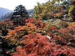 神奈川県の箱根強羅は箱根でも屈指の紅葉の名所 茶室から眺める苔庭には200本以上のモミジがあり思わず絶句してしまうほどの美しさです ぜひ今シーズン行って見てください tags[神奈川県]