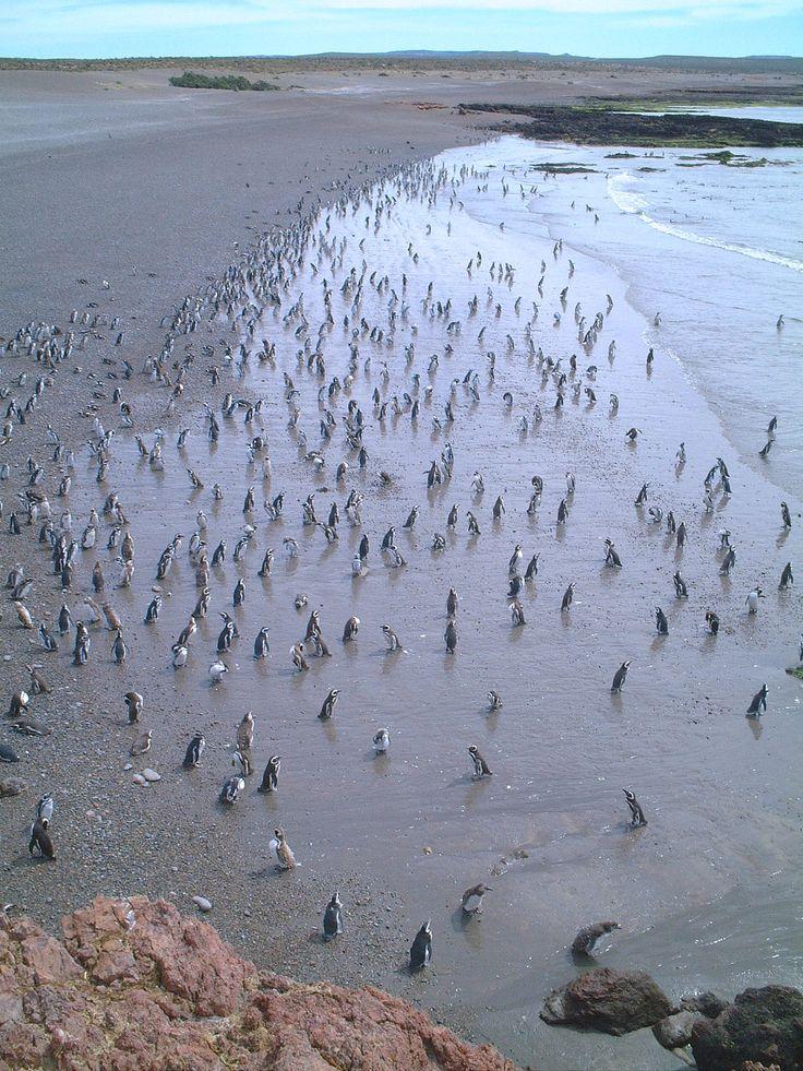 Punta Tombo - Chubut