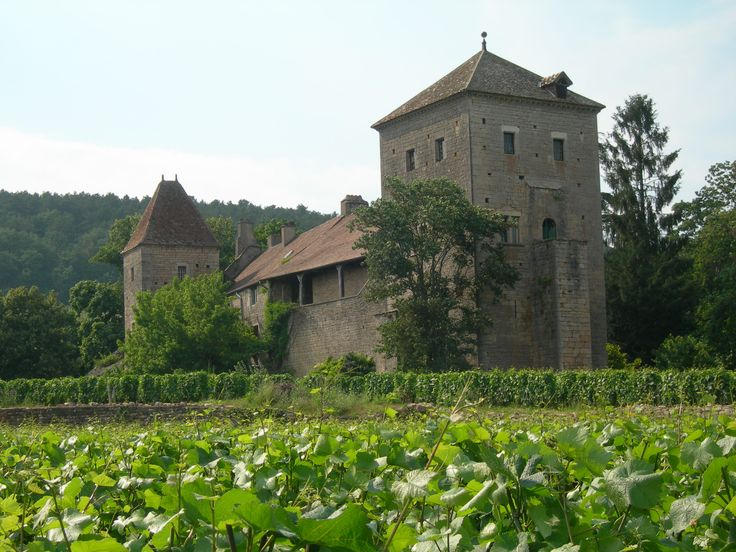 Vibrant green vineyards o Gevrey Chambertin in Burgundy, France www.bcfw.co.uk