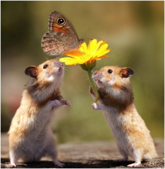蝶々とたわむれるハムスター