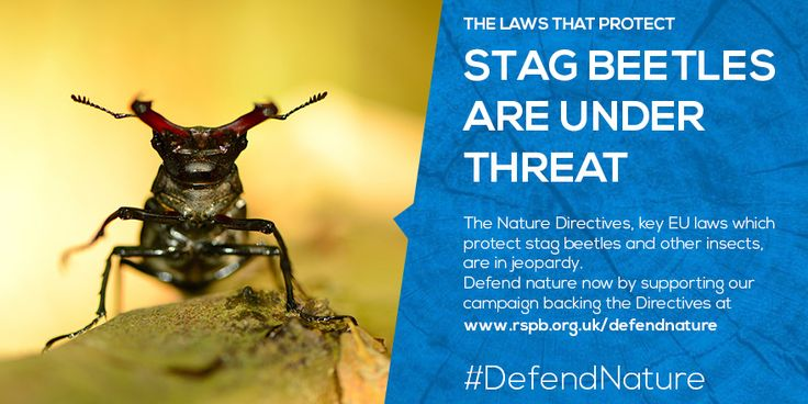 #'defendnature Stag beetles are under threat