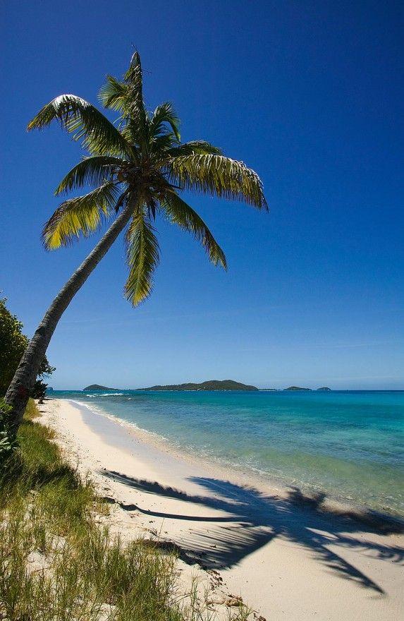 Caribbean dream! Beach & coconut palm,  Petit Bateau Island, Tobago Cays, Grenadine islands. MagicMurals #nature