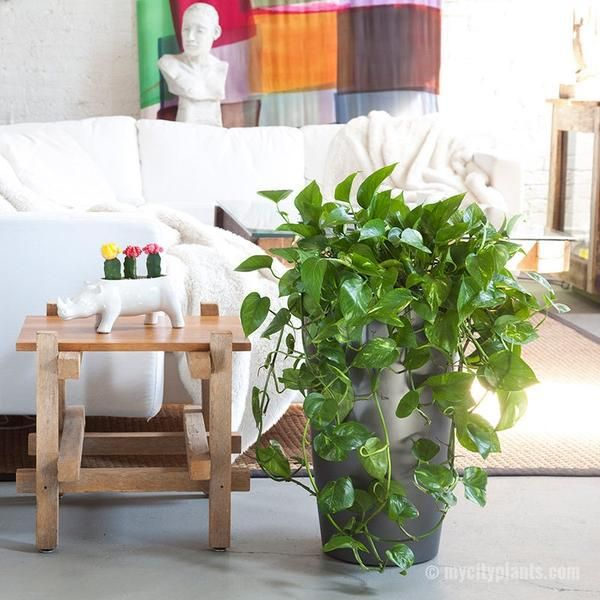 15 attractive indoor plants to easily green up your home - Homeology