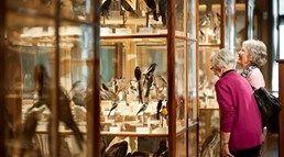 Fågelsamling på Vänersborgs museum.