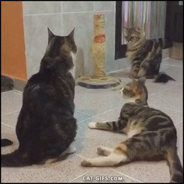 Amazing cat reflexes HAHAHA!  | Follow @gwylio0148 for more funny pet videos  :)