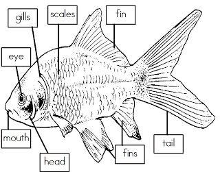 Mrs. Is Class: Label the Parts of a Fish (freebie)