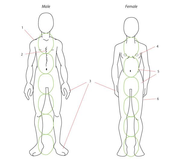 Human Anatomy Fundamentals: Drawing Different Ages - Tuts+ Design & Illustration Tutorial
