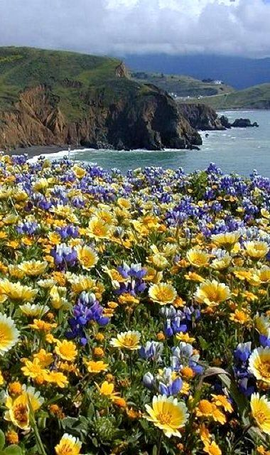 Mori Point Park located in Pacifica, California with new trails in a 32 acre area! Beautiful views.
