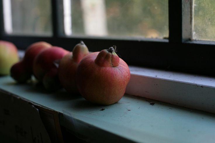 week 27: Strange fruit