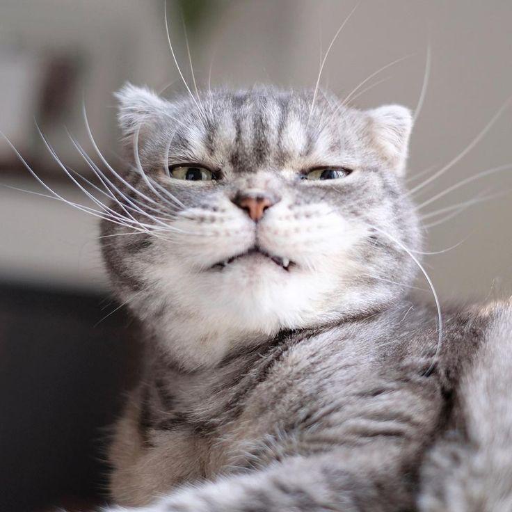 にくたらカワイイ♡ 表情が豊かすぎるニャンコが見せてくれた、変幻自在な変顔10選   エンタメウィーク