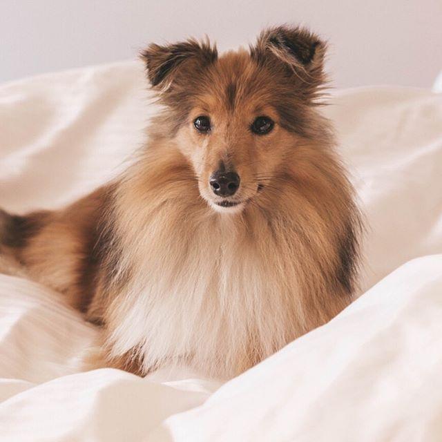 Bild Konnte Enthalten Hund Regram Via Www Instagram Com P By