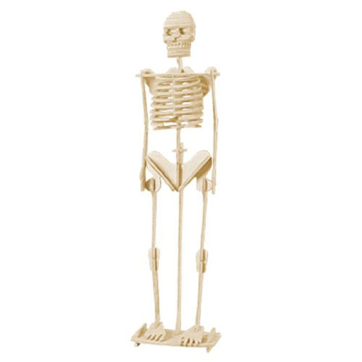 best 20+ human skeleton 3d ideas on pinterest | human skeleton, Skeleton