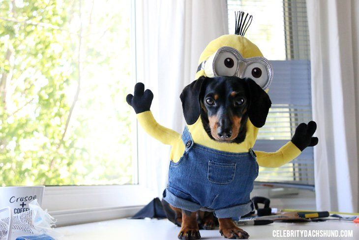 DIY Small Dog Minions Costume