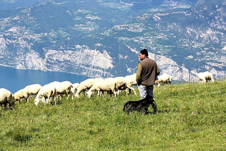http://stadoowiec.pl/ #owce