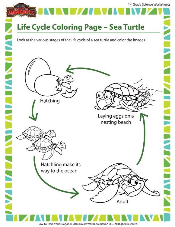 Life Cycle Coloring Page – Sea Turtle - Aquatic reptile
